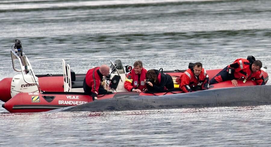 Den strandede finhval i Vejle Fjord er død og undersøges her af specialister