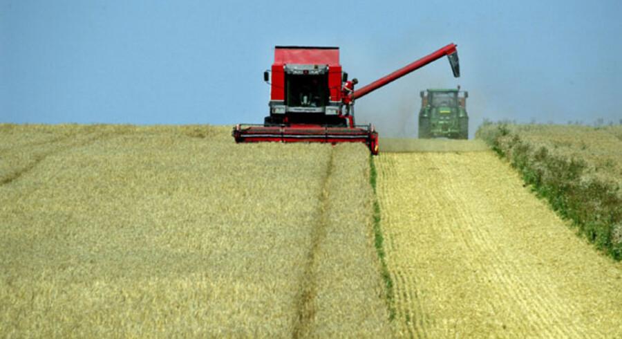 Efterspørgslen på råvarer til fremstilling af bioethanol presser konpriserne i vejret.
