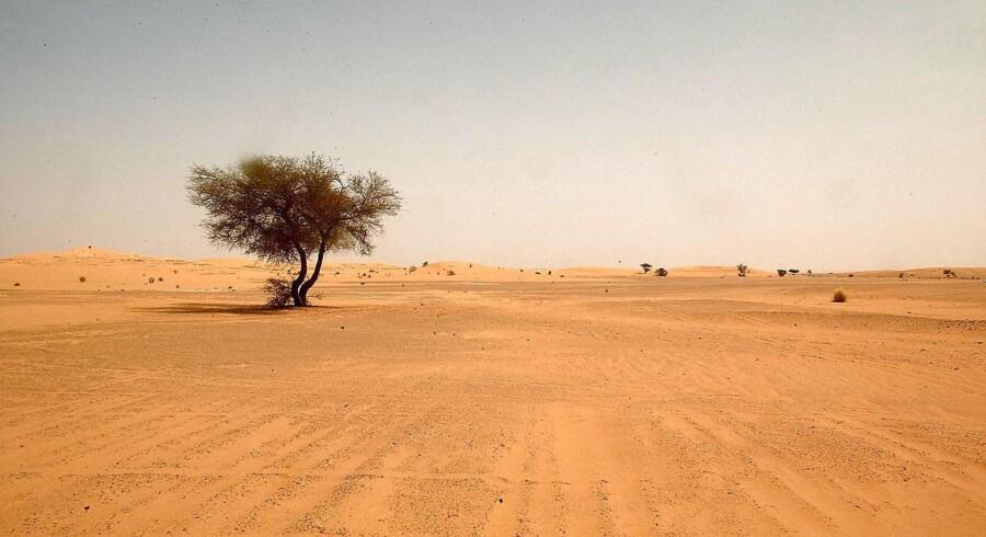 Danmark kan i weekenden blive ramt af det sjældne vejrfænomen blodregn, som opstår, når sand og støv fra Sahara-ørkenen i få kilometers højde blæser hele vejen ind over Danmark og blander sig med en frontzone med regn.