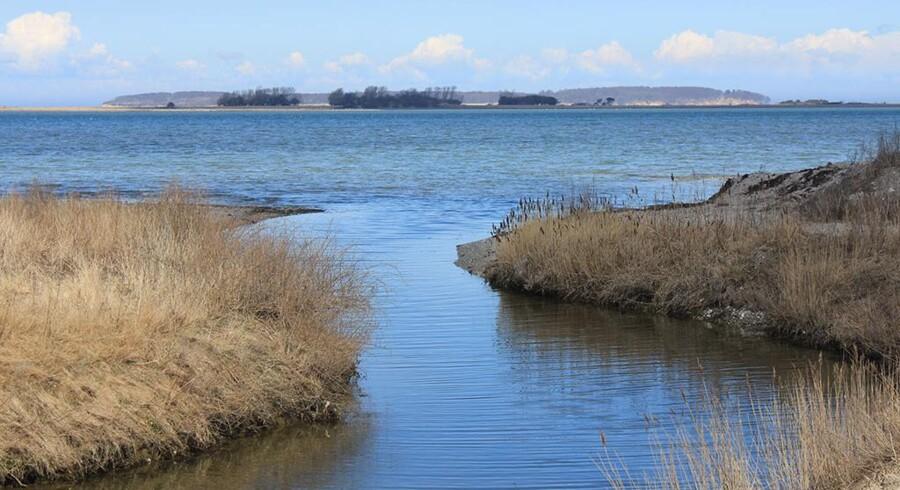 Gyldensteen Sø etableres på 142 hektar med gennemsnitsdybde på 0,5 m.