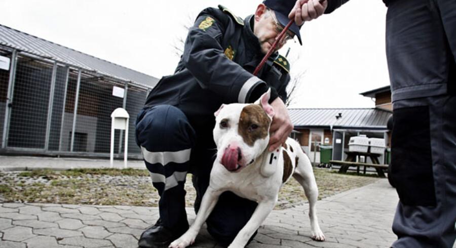 »I et så erstatnings- og statistikfikseret samfund som det amerikanske er der naturligvis lavet statistikker over bidskader, og i disse statistikker er der adskillige 'familiehunde-typer', der slår 'muskelhunde-typerne'.«