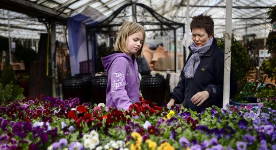 Ida, otte år, er i havecentret sammen med sin mor, Linda Stark, for at købe stedmoderblomster. Hun kan bedst lidede hvide, selvom hendes yndlingsfarve er lilla.