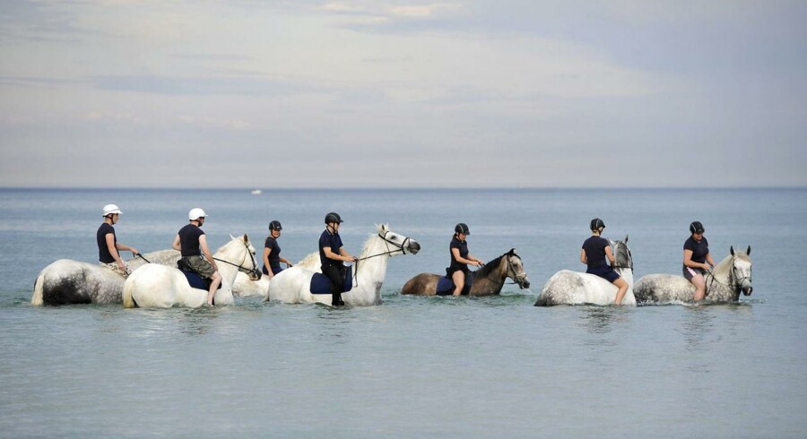 Ridende politi i Adelaide tager politihestene med ud på en morgensvømmetur for at køle dem ned inden dagens arbejde. Temperaturen i den australske by har rundet 43,5 grader.