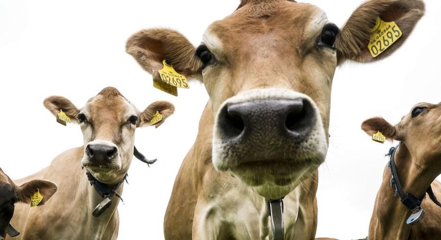 Vi kan på verdensplan nøjes med få tusinde køer, hvis vi kommer over den mentale barriere, som det er at spise kunstigt fremstillet kød. Det er nemlig kød. Det er bare frembragt på en fabrik i stedet for på en grøn græsmark.