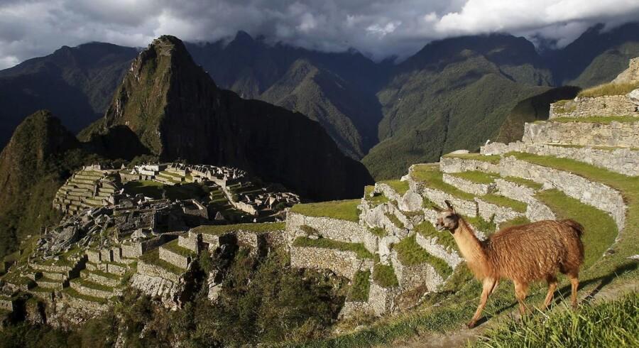 En lama betragter inkaruinerne Machu Picchu i Peru, som er en del af den uvurderlige verdensarv, der er truet som følge af eksempelvis ulovlig skovhugst, minedrift og olieudvindeing.