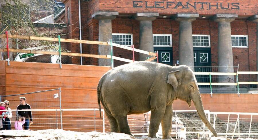 Elefanthuset har været et vartegn for Zoologisk Have siden det blev bygget i 1914. Men snart er det slut.
