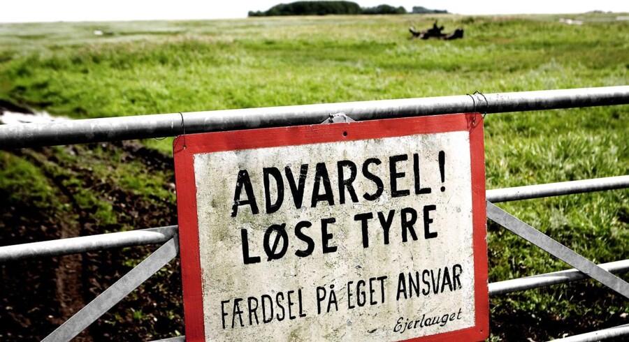 På Saltholm - Advarsel mod løse tyre på Saltholm. Nu fredes fuglene på øen.