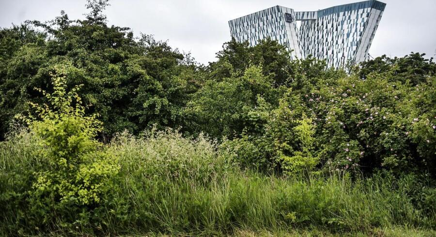 Diskussionen om bebyggelse på Amager Fælled har stået på meget længe. Forskningschef Hans Thor Andersen fra Aalborg Universitet mener dog ikke, at diskussionen om Amager Fælled er unik. Det vil altid ske, når der skal bygges noget nyt. Ikke desto mindre er det forringelse af kvalitet på byen, som i sidste ende kan undergrave Københavns attraktion.