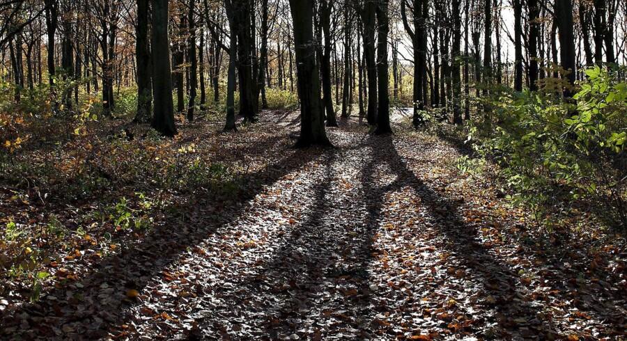 Over et halvt århundrede bliver 45 statsskove rundt om i landet mere vilde. Det skal gavne dyr og planter.