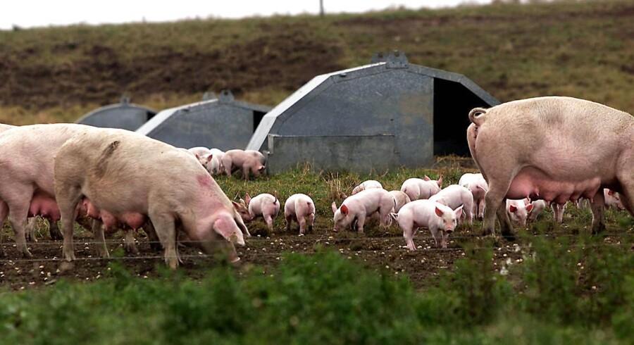 Arkivfoto: AC Farming i Sydjylland er begæret konkurs.