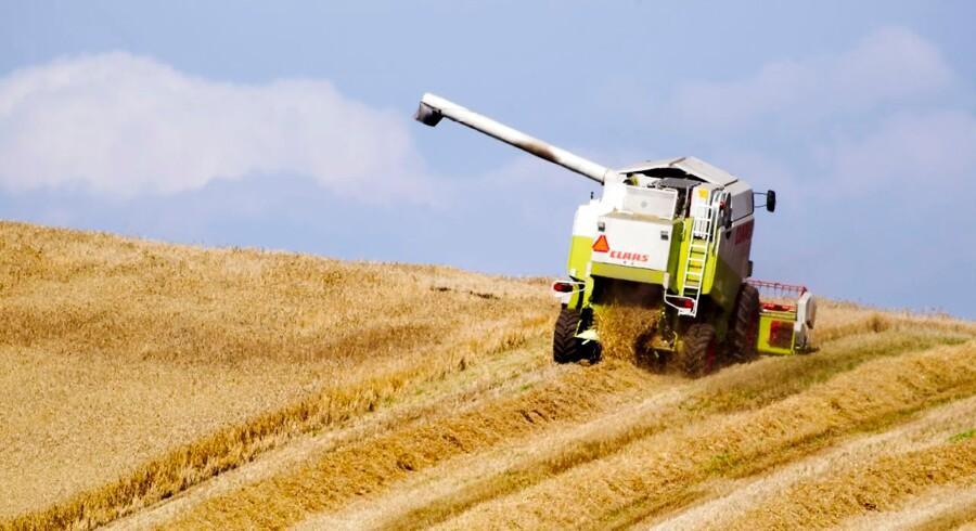 """(ARKIV) Høst mellem Struer og Humlum. Landbrug & Fødevarer kommer fredag med et forslag til en """"tørkepakke"""", der skal hjælpe de pressede landmænd. Det skriver Ritzau, fredag den 17. august 2018.. (Foto: Johan Gadegaard/Ritzau Scanpix)"""