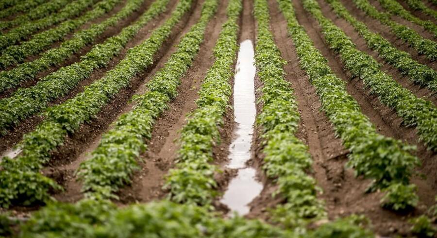 Landbruget har også interesse i rent grundvand, skriver Morten Høyer fra Landbrug & Fødevarer.