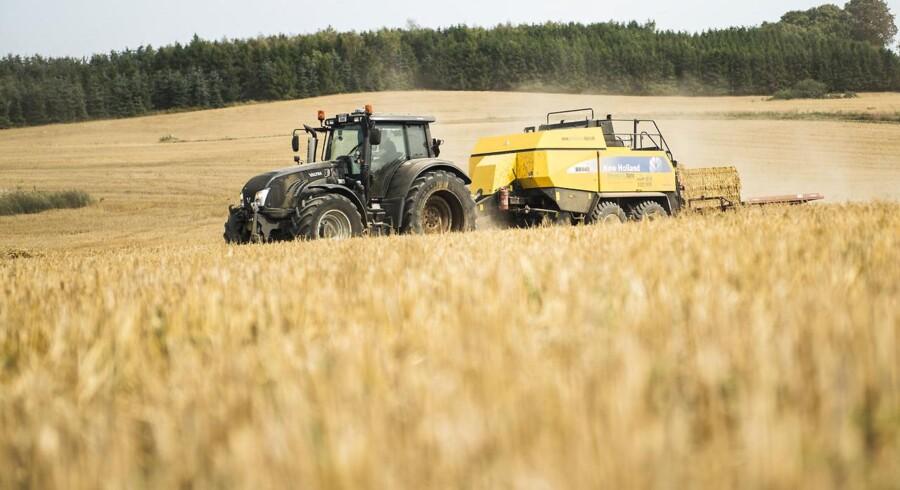 Sommerens ekstreme tørke, der har efterladt danske landmænd med afsvedne marker, har fået Landbrugets organisation Landbrug & Fødevarer til at ønske en tørkepakke med hjælp til landmændene.