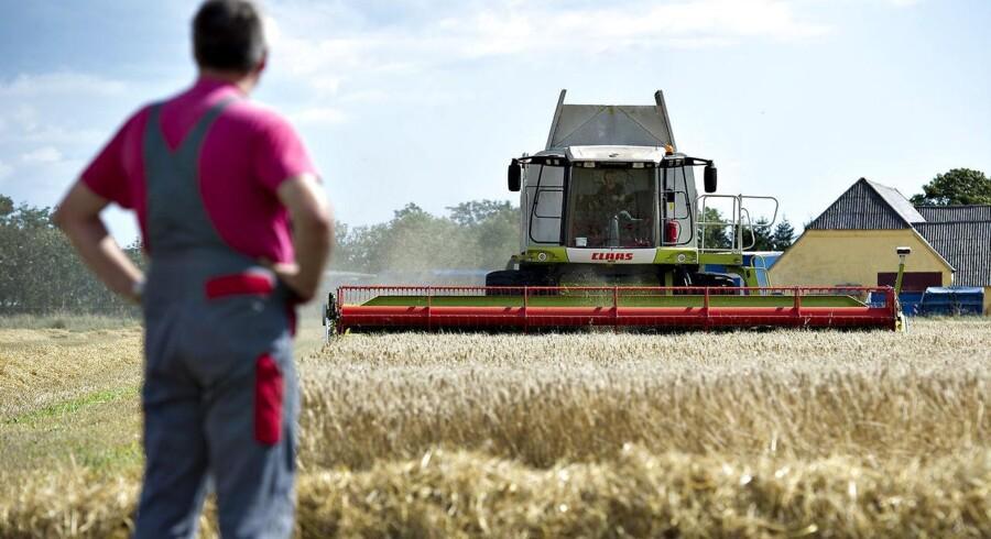 2018 har været et sløjt år for dansk landbrug, der forventer største underskud siden finanskrisen.