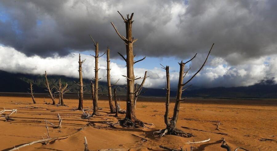 »På globalt plan er tørke en af de primære årsager til en fejlslået høst, og med tiden vil tørke kun stige i intensitet og varighed,« skriver Maja Rimer