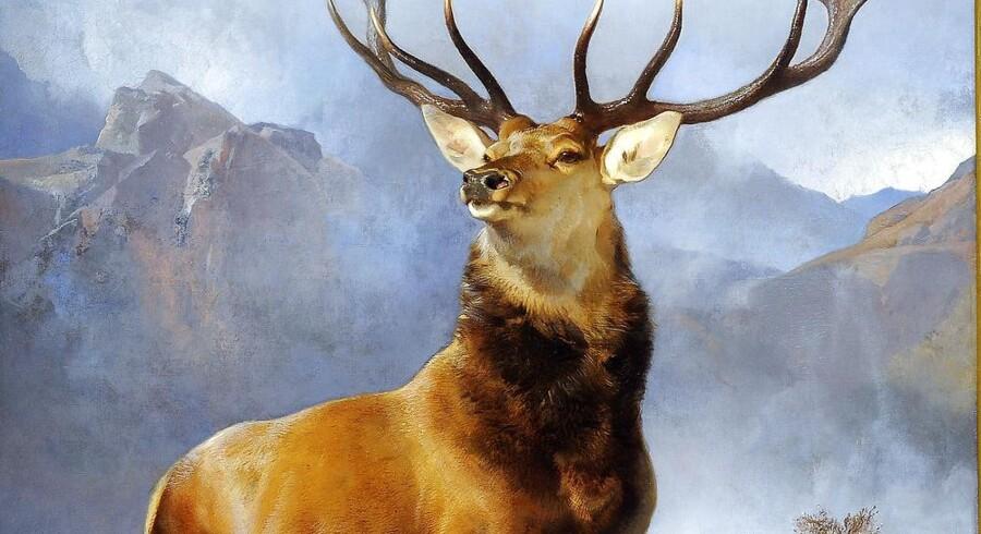 »The Monarch of the Glen« af Sir Edwin Landseer er Skotlandsk mest ikoniske maleri og blev for nylig købt hjem Scottish National Gallery i Edinburgh for penge fra en stor indsamling. Foto: Andy Buchanan/ AFP