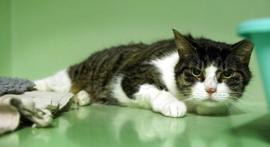 Ifølge positivismen er kun det helt åbenlyse sandt. F.eks. at dette er et billede af en kat.