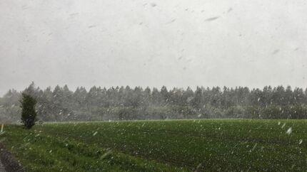 Jylland blev ramt af snevejr - her er det imellem Ikast og Viborg, fredag den 3. maj 2019. DMI lover spredte byger, som kan være med slud, sne, hagl og torden fredag aften og nat. Det er kold luft fra Polarhavet som driver ned langs Norges vestkyst og er skyld i det vinterkolde vejr i maj. Blandt andet i 2010 og 2011 blev Danmark ramt af snebyger i maj. Og sidste år sneede det i begyndelsen af april. Går man længere tilbage var der i 1966 en regulær snestorm i midten af april, hvilket hører til de absolutte sjældenheder, skriver Ritzau fredag den 3. maj 2019.. (Foto: Mads Claus Rasmussen/Ritzau Scanpix)