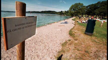 ARKIVFOTO. Skilte som disse er sat op ved Frederiksdal Fribad for at advare badegæster mod blågrønalger.