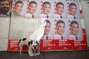 Mange spaniere synes at have samme mening om Pedro Sánchez og hans omvalg som denne franske bulldog. I hvert fald fik han ikke den forventede fremgang, men mistede tværtimod et par mandater.